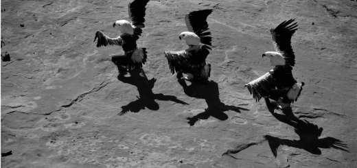 Marmon-Laguna-Eagle-Dancers1