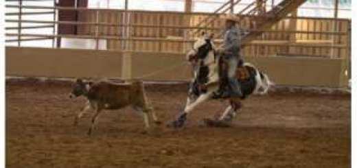 ultimate-calf-roping-04-320x320