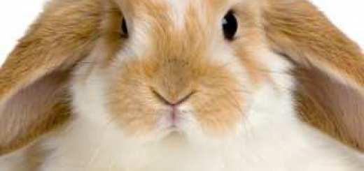 more-cute-bunnies-320x320